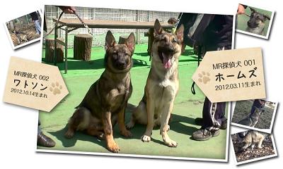 探偵事務所MRの探偵犬(ホームズとワトソン)